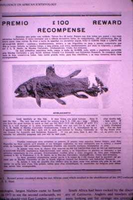 reward coelacanth
