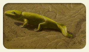 First Amphibians On Earth Images & Pictures - Becuo
